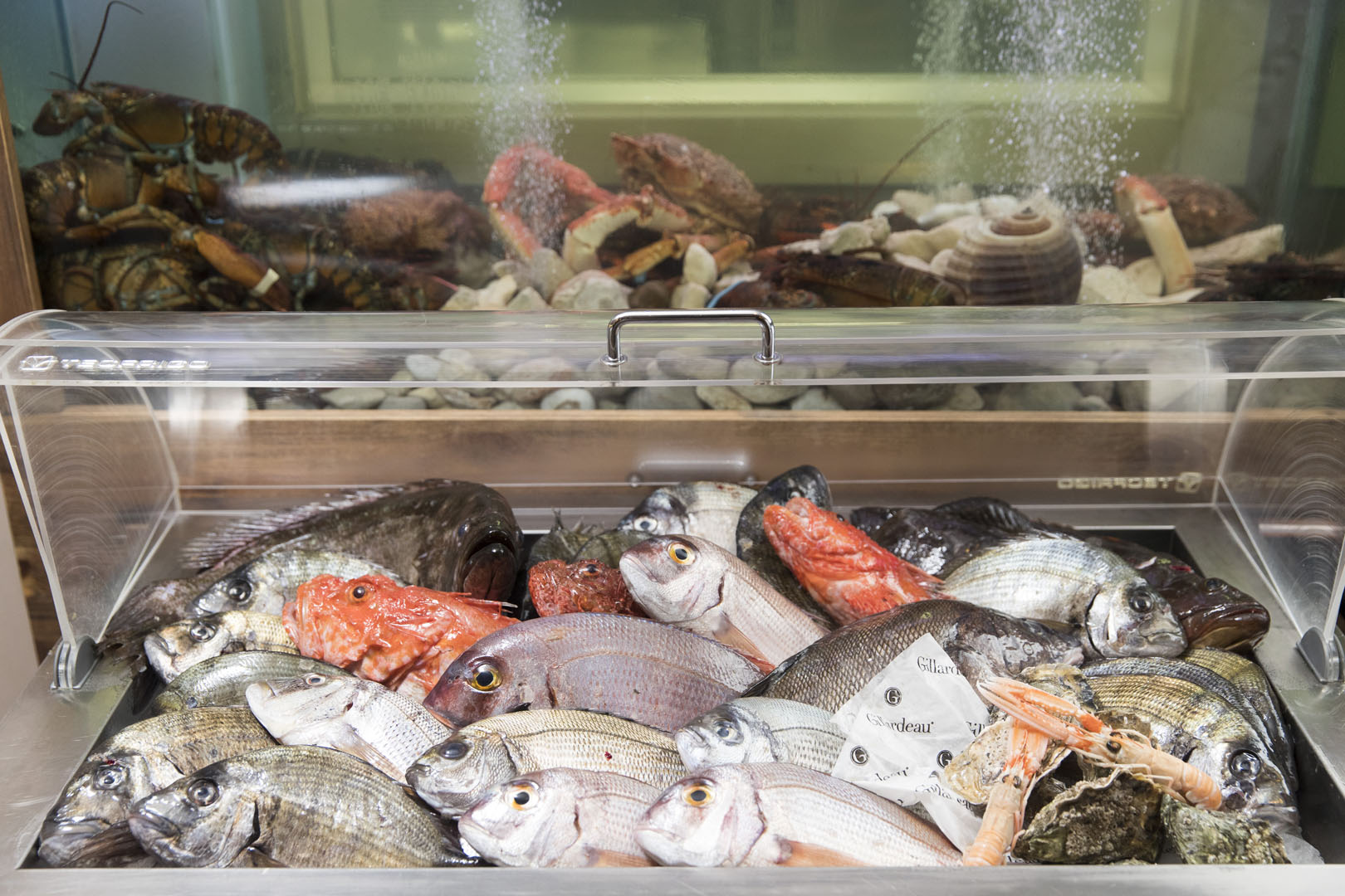 Fish - Malta Restaurant, Surf N Turf